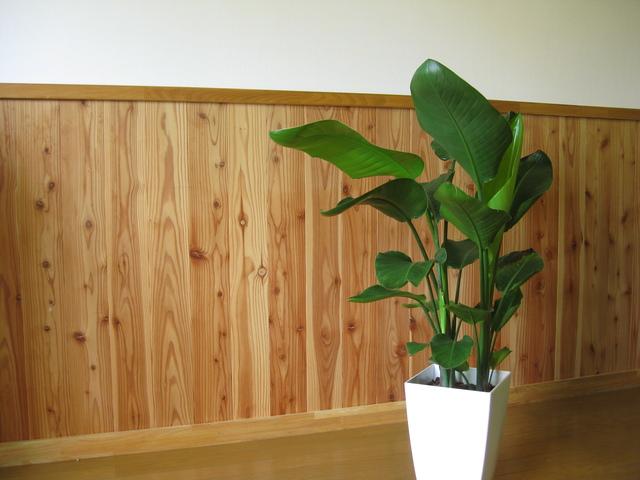 部屋をいろどる観葉植物
