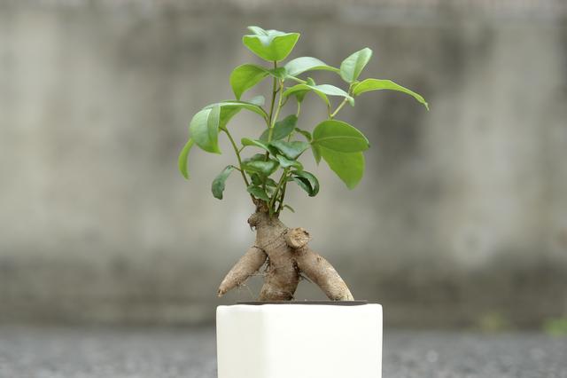 観葉植物を育ててみよう