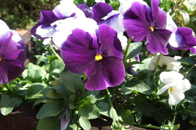 ビギナー向けの育てやすい植物