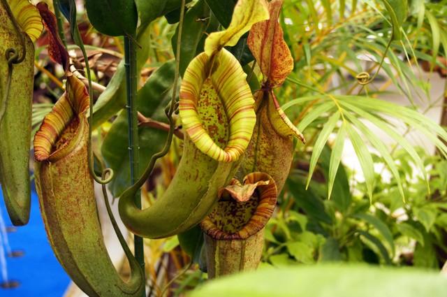 食虫植物を育ててみよう