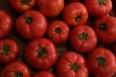 pixta_tomato03