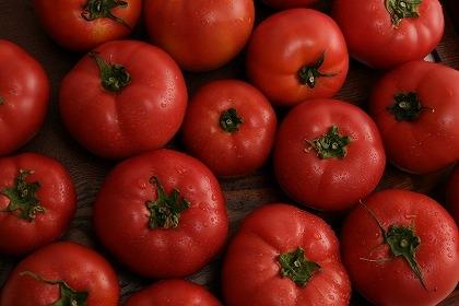 おいしいトマトを作りましょう