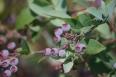 pixta_bluberry_01