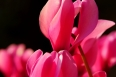 pixta_gardenshikuramen