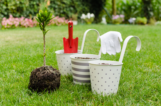 植物の栽培を充実させる道具と努力