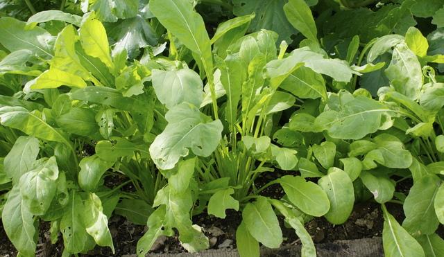 はじめての家庭菜園で役立つ基本的な野菜の育て方