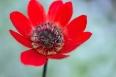 pixta_anemone