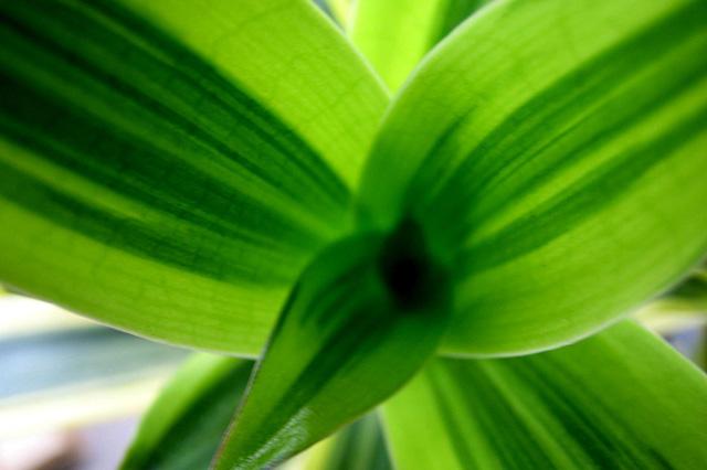 初心者でも簡単な観葉植物について