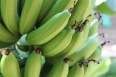 pixta_banana11