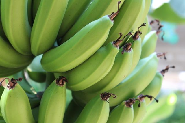 バナナの育て方