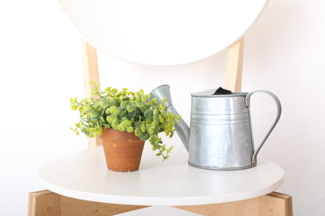 植物を鉢植えで育てるための基本